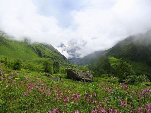 Valley_of_flowers