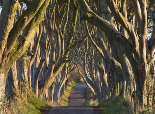 DARK_HEDGES_IRELAND