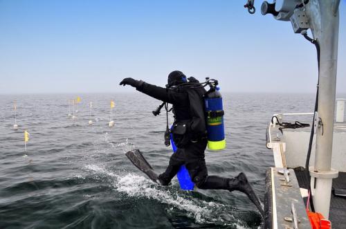 Scuba-diver-1237237_640
