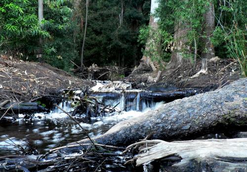 Stream _Tokai_Arboretum _Cape_Town