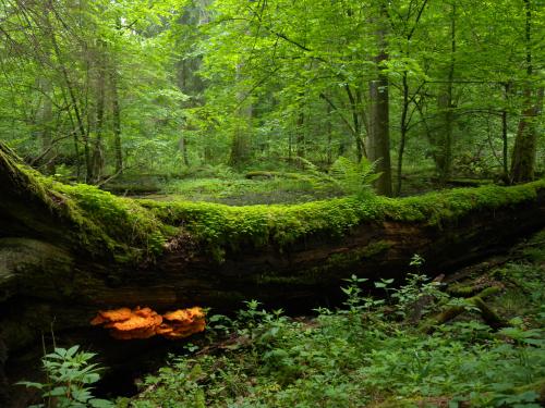 Białowieża National Park
