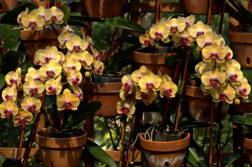 Orchids-737023_640
